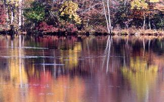 nature scene